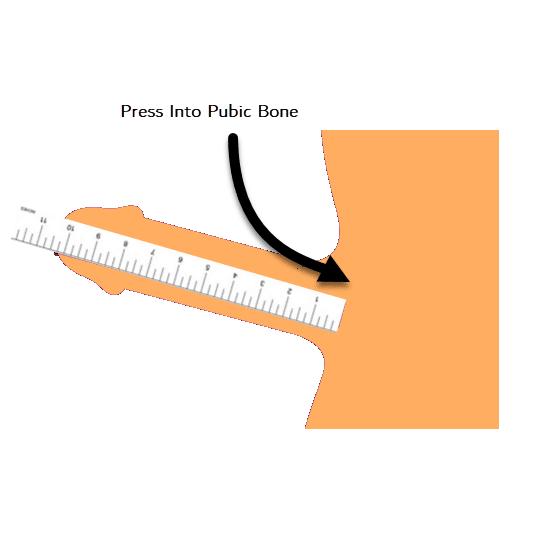 measure penis length size